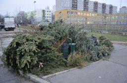 Fenyőfák elszállítása – Gyűjtőhelyek Kispesten 2021-ben