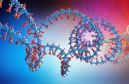 Nyirokérnövekedést serkentő rendszert dolgoztak ki a Semmelweis Egyetem kutatói